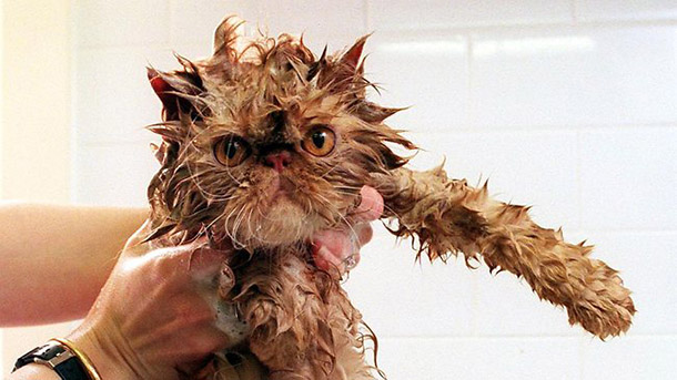 hilarious-wet-cats-10
