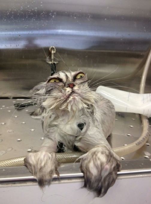 hilarious-wet-cats-14