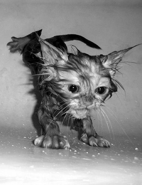 hilarious-wet-cats-17