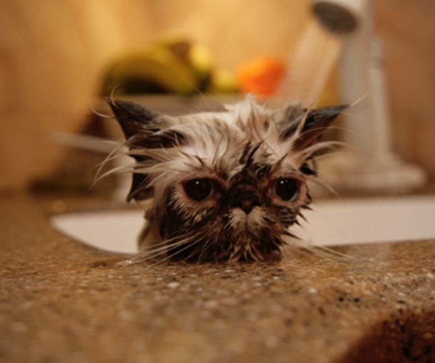 hilarious-wet-cats-19