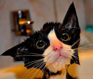 hilarious-wet-cats-2 fi