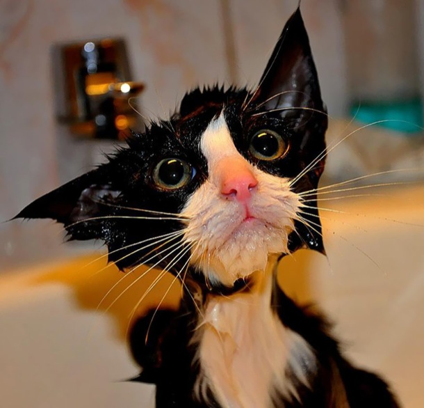 hilarious-wet-cats-2