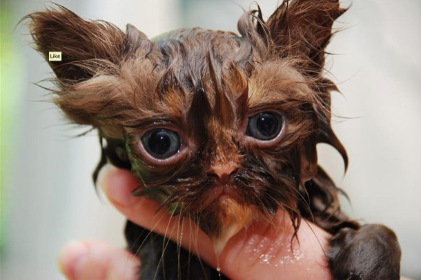 hilarious-wet-cats-25