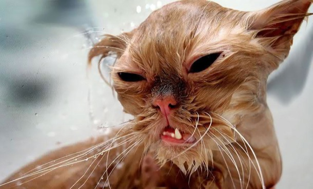 hilarious-wet-cats-26