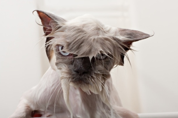 hilarious-wet-cats-9