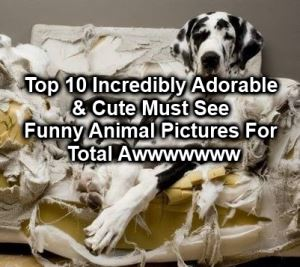top ten animals
