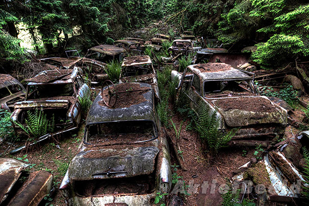 Chatillion Car Graveyard 3