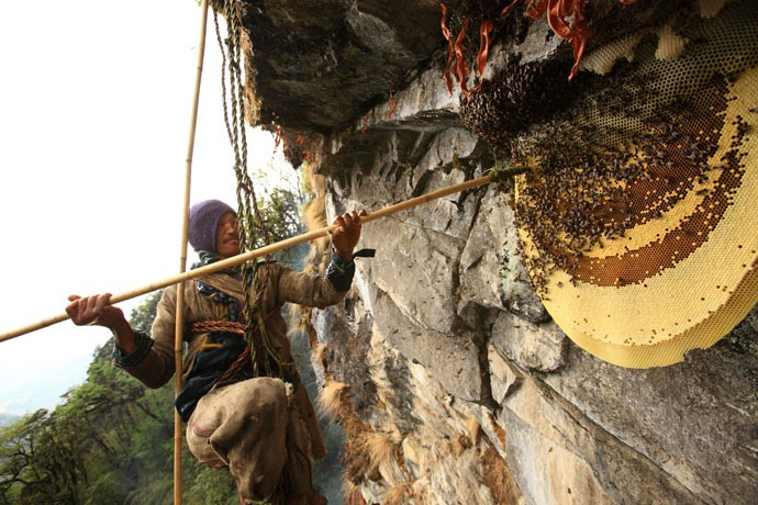 honey-hunters-nepal-16