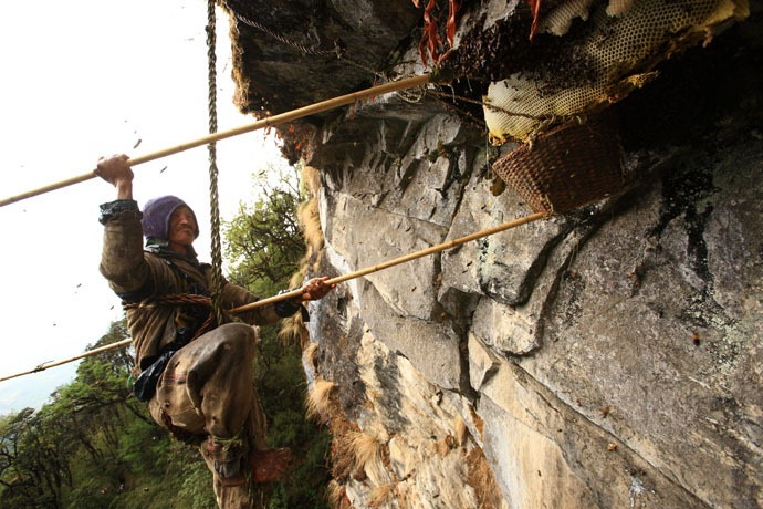 honey-hunters-nepal-17