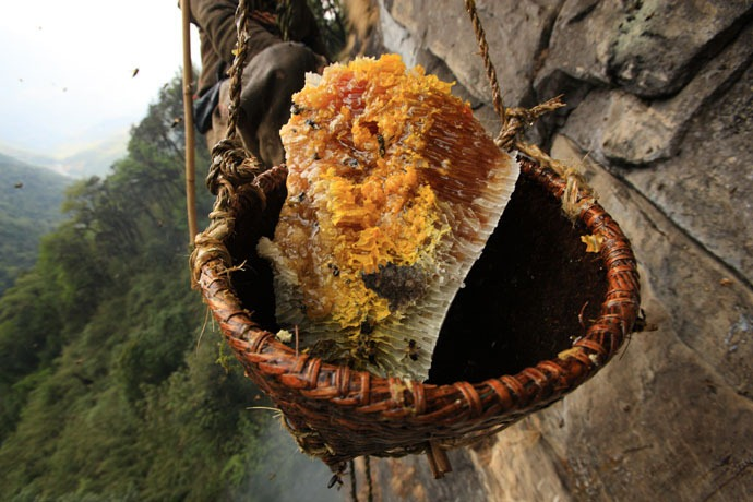 honey-hunters-nepal-19