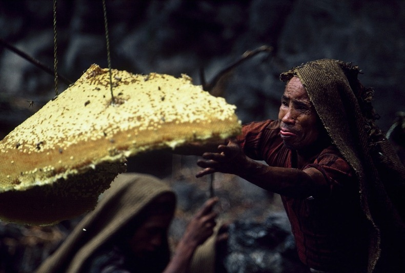 honey-hunters-nepal-4