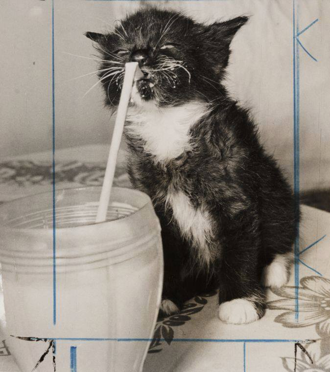 cat with straw 14