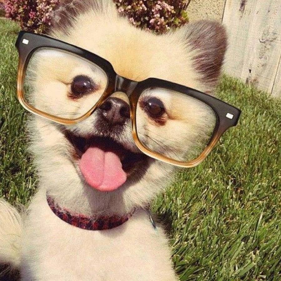 dogs in glasses 1