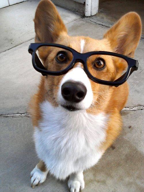 dogs in glasses 2