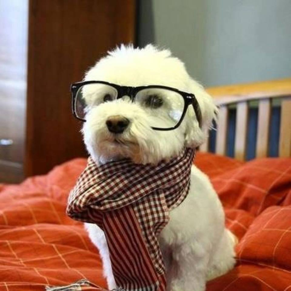 dogs in glasses 3