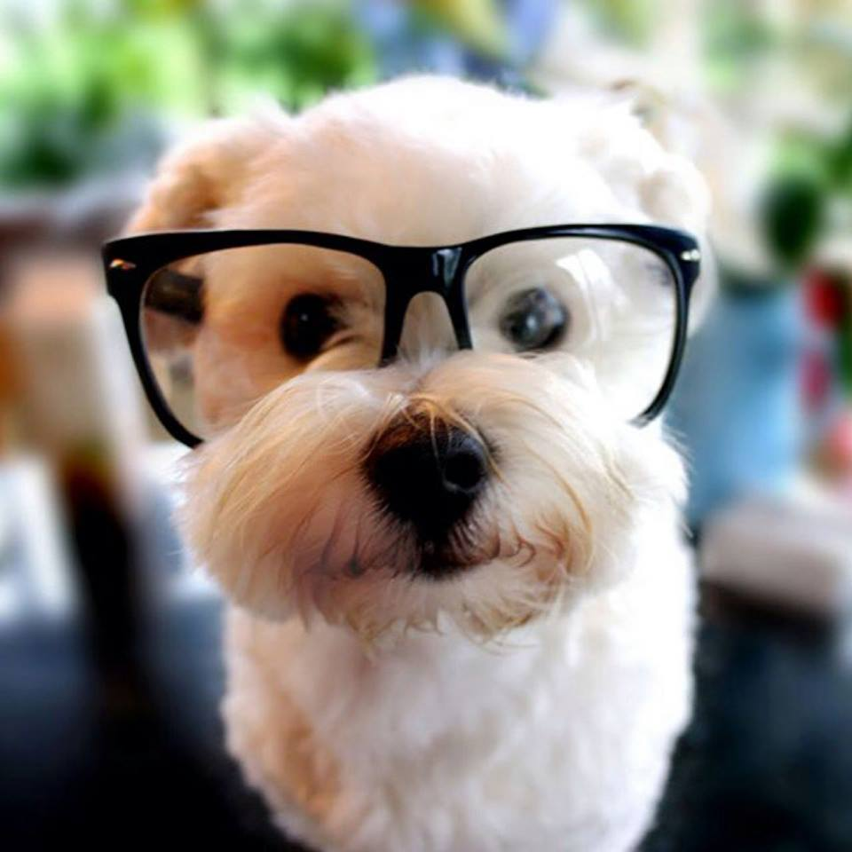 dogs in glasses 5