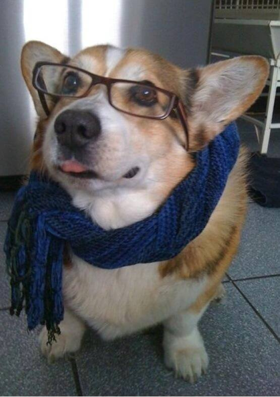 dogs in glasses 6