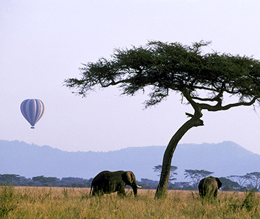 Hot air balloon safari and African elephants in the Serengeti National Park