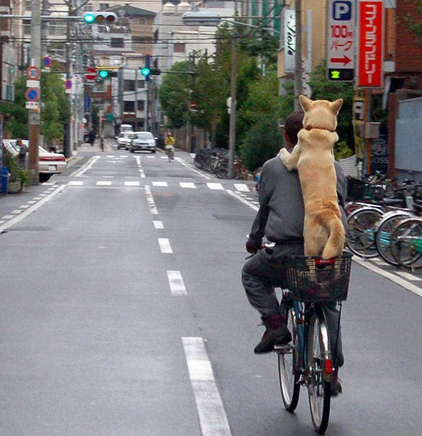 dog on bike 1