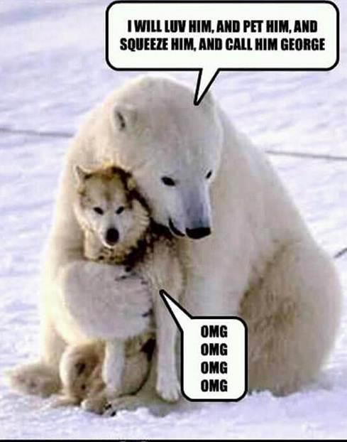 funny husky dog pictures 19
