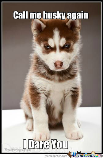 funny husky dog pictures 28