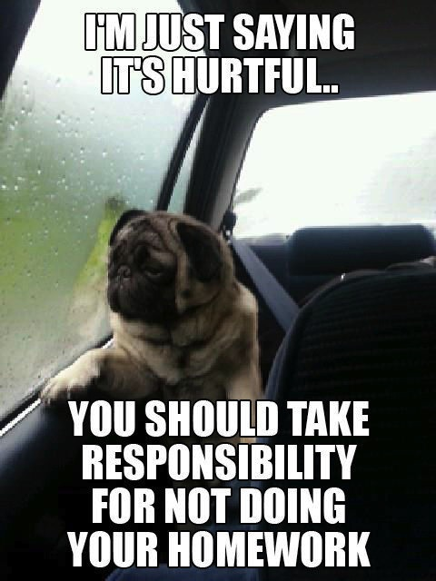funny pug pictures 14