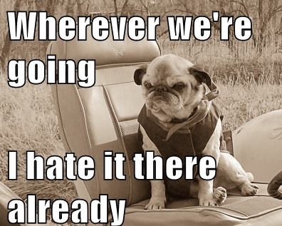 funny pug pictures 15