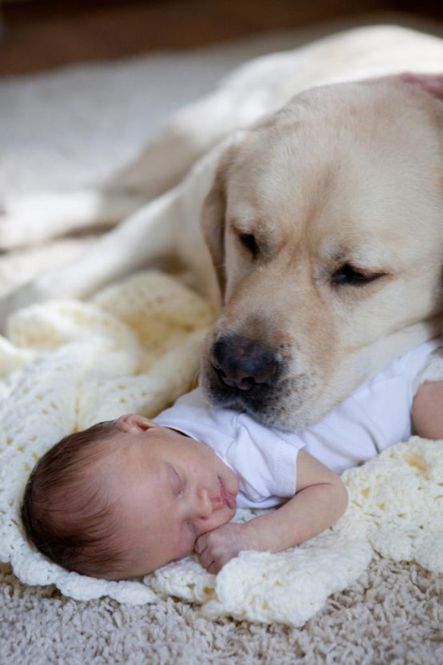 labs with kids 2