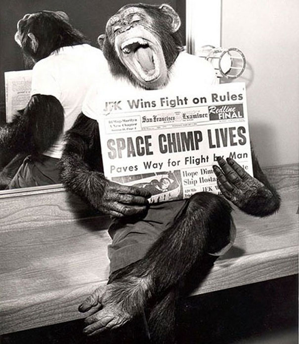 Space Chimp Posing For Press After Flight