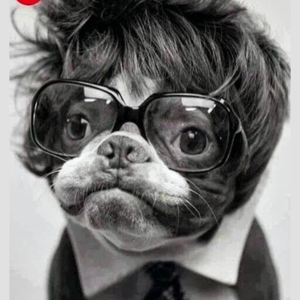 LOOK! These Dog's Are Wearing Glasses & They Suit Them. 14
